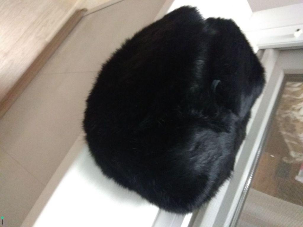 Мужская шапка (кролик)