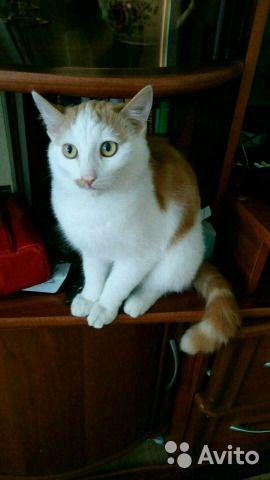 Котенок котик